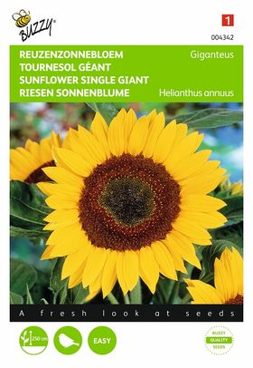 Sunflower Seeds Giant