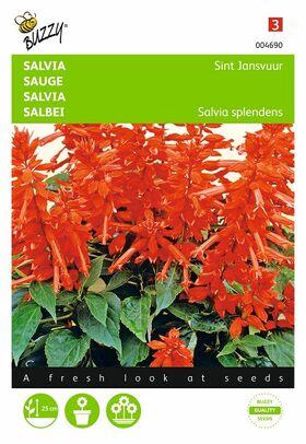 salvia flower seeds