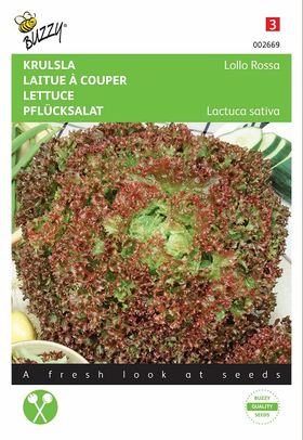 Lettuce seeds Lollo Rossa