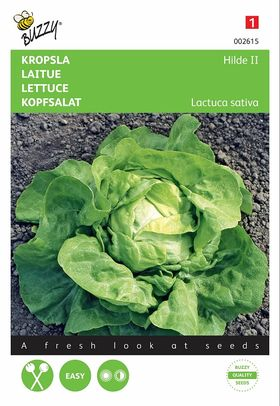 Lettuce seeds Hilde II