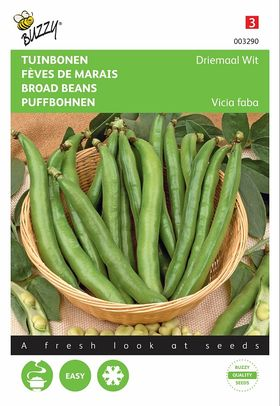 Broad Beans  Seeds Threefold White