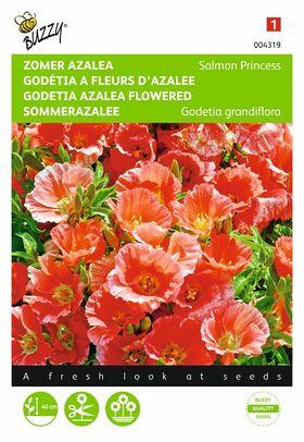 Godetia Azalea Flowered Seeds