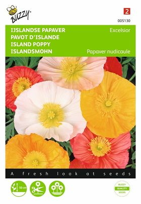 Island poppies flower seeds