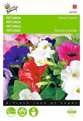 Petunia Dwarf Mixed