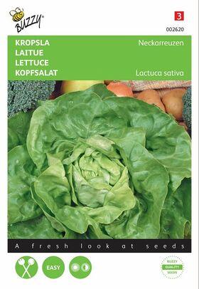 Lettuce Seeds Summerdiamond