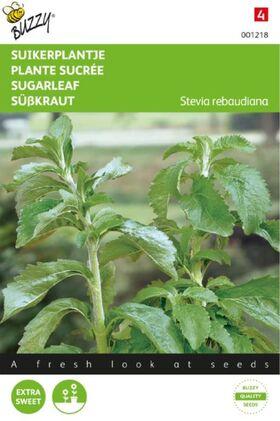 Stevia Rebaundiana / Sugar Leaf