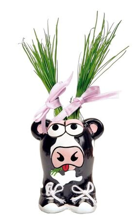 Munakuppi Cow with grass hair