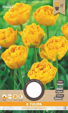 Tulpen bloembollen Yellow Pomponette